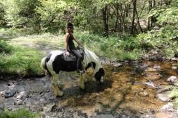 Met je paard in de beek